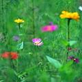写真: 05 カラフルな色