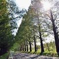 写真: 04 木漏れ陽