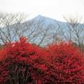 12 紅からの背景