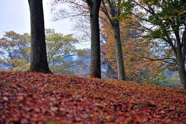18 落葉樹の山