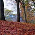 写真: 18 落葉樹の山