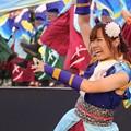 Photos: こいや2017 フィナーレ よさ朗 22