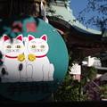 Photos: 招き猫(その2)