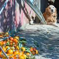 柿を求め気ままな散策 3