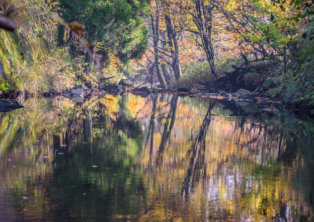 写真: 晩秋の渓谷