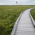 写真: 湿原の朝