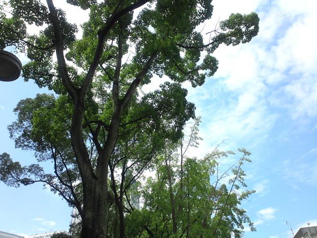 靱公園 MUSIC FESTA FM COCOLO ~風のハミング~