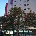 Photos: 基町クレドパセーラ ふれあい広場 サルスベリ 2017年8月27日