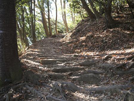 木漏れ日の山道(2)