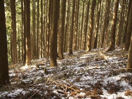 雪の残る山林