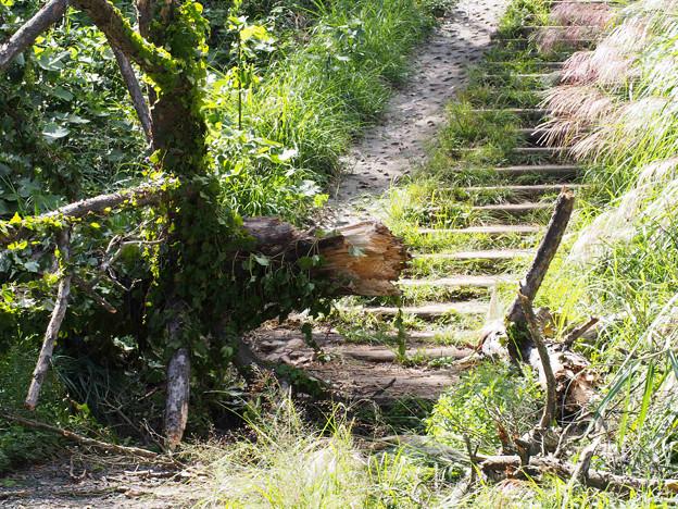 一丁平出口の倒木