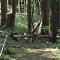 写真: 城山下にも倒木が