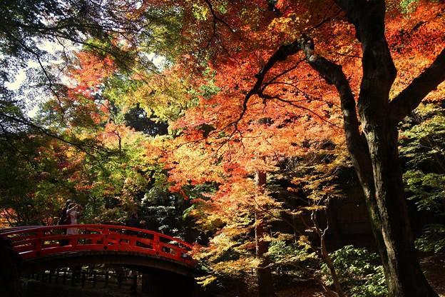 紅葉と紅い鶯橋