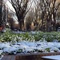 Photos: 雪景色のけやき通り