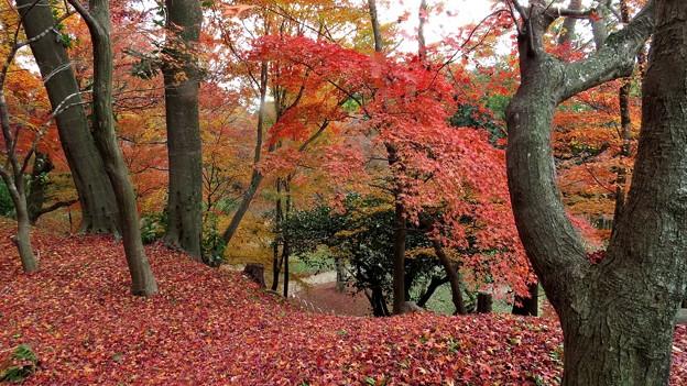 北野天満の紅葉