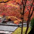 写真: 楓の家