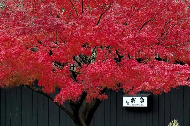 旅籠の紅葉