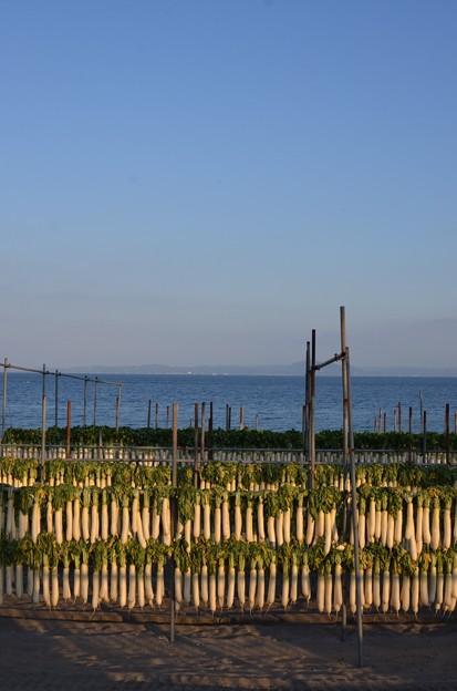 三浦海岸にも秋が
