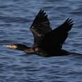 写真: 川辺の翼