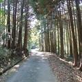 Photos: こうち滝への道 (2)