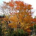 写真: 紅葉 (1)