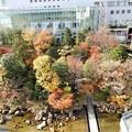 Photos: 新梅田シティ・中自然の森 (2)