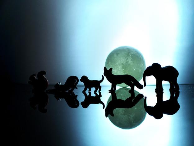 アニマル分隊、月夜を往く