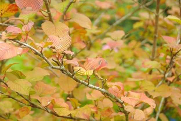 小さな秋見つけた。
