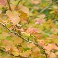 写真: 小さな秋見つけた。