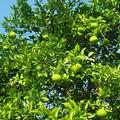 Photos: 樹木の香り