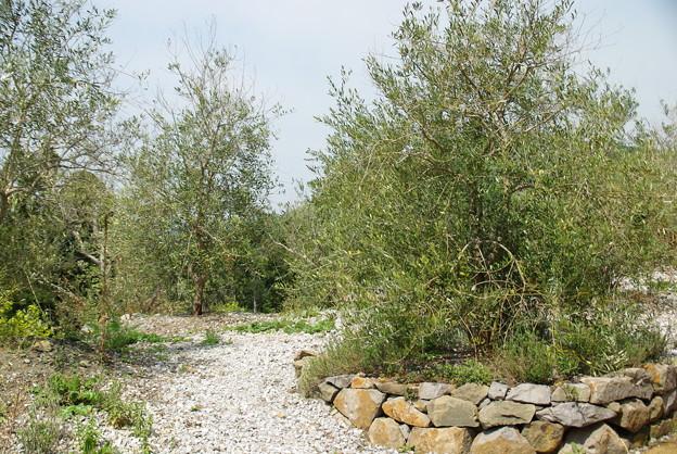 モネの庭/光の庭・オリーブ園