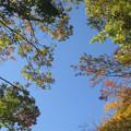 Photos: 樹木と空