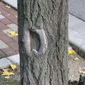 写真: 木