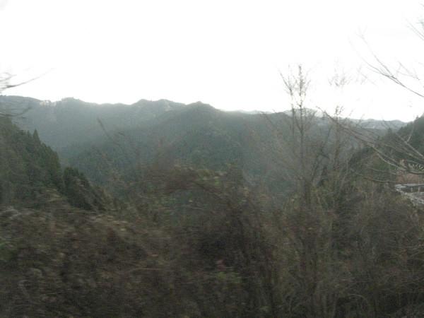 写真: 森林