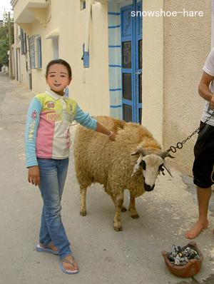 うちの羊♪