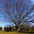 眠れる巨木