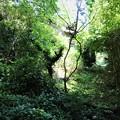 写真: 母の居なくなった故郷の庭は・・・