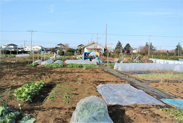 Photos: 菜園全景