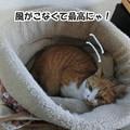 Photos: 快適になったベッド