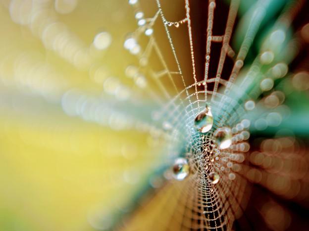 蜘蛛の巣 露