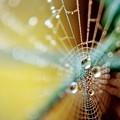 写真: 蜘蛛の巣 露
