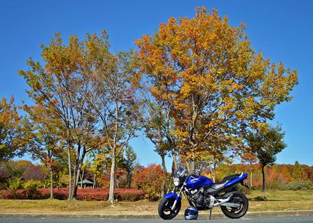 黄葉とバイク