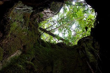 白谷雲水峡の木その13