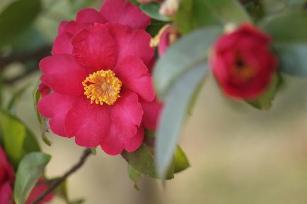 花とつぼみ