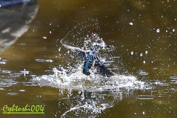 水を纒う翡翠