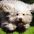 写真: フライングモップ犬 via 駅ポスター