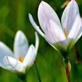 写真: 花弁の輝き