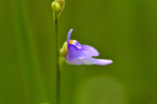 写真: 湿地のひょうきんもの。