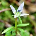 写真: 冬を待つ花