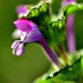 Photos: 春を待つ花